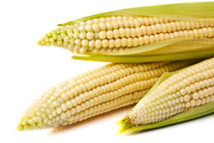 Corn  on a white b Stock Photos