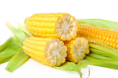 The corn on a white background Stock Images