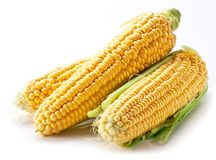 Corn on a white background. Stock Images