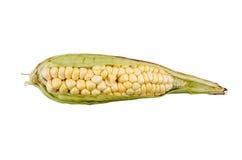 Corn on a white background Stock Photos