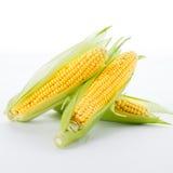 Corn on a white Royalty Free Stock Photos