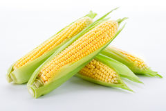 Corn on a white Stock Photography