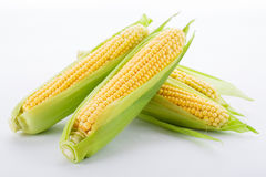 Corn on a white Royalty Free Stock Images