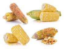 Corn on white background Royalty Free Stock Image