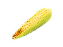 Corn on white background Stock Photography