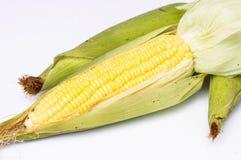 Corn  on a white background. Grain of ripe corn  on a white background Royalty Free Stock Photos