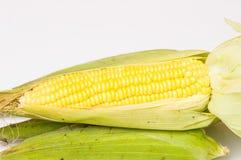 Corn  on a white background. Grain of ripe corn  on a white background Royalty Free Stock Photography