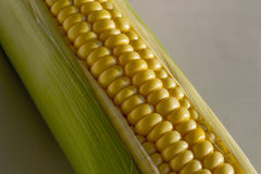 Corn on a white background. In the husk Stock Image