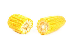 Corn  on a white background. Corn isolated on a white background Stock Photos