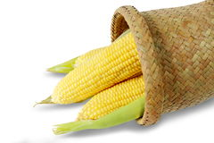 Corn on white background. Stock Images