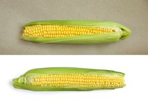 Corn on white and ocherous background royalty free stock images