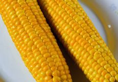 Corn on the white plate. Two freshly cooked corn on a plate Royalty Free Stock Images