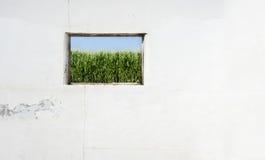Corn window Royalty Free Stock Photos