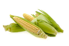 Corn With Leaves Stock Images