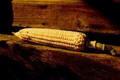 Corn on wood. Natural corn on a wood step Royalty Free Stock Photos