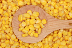 Corn on a wooden spoon Stock Photography
