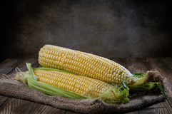 Corn. On the wooden table stock photography
