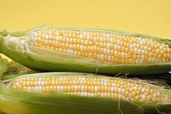 Corn on Yellow Stock Photos
