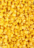 Corn yellow macro Stock Photography