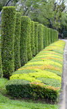 Cornamental plants Royalty Free Stock Images