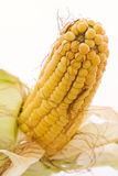 Corncob Stock Photos