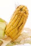 Corncob. Fresh corncob with husk as closeup Stock Photos