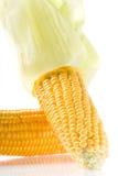Corncob Photographie stock libre de droits