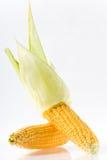 Corncob Image libre de droits