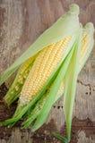 Corncob. Many fresh ripe corn cobs Stock Photo