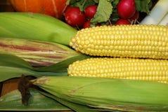 corncob Fotografie Stock
