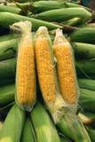corncob стоковые изображения rf