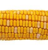 corncob стоковые изображения