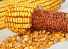 Corncob Background Stock Photos