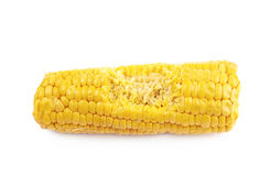 Corncob with a bite taken off Royalty Free Stock Photography