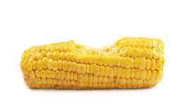 Corncob with a bite taken off Royalty Free Stock Image