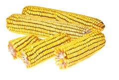 Corncob del maíz foto de archivo libre de regalías