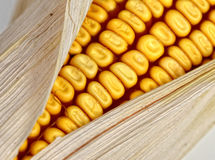 Corncob detail Royalty Free Stock Images