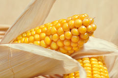 Corncob detail Stock Photos