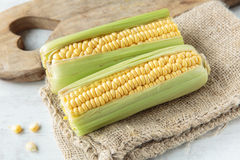 Corncob. Fresh raw corncob on jute cloth Royalty Free Stock Photo