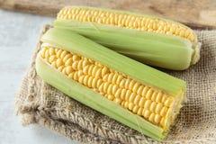 Corncob. Fresh raw corncob on jute cloth Stock Images