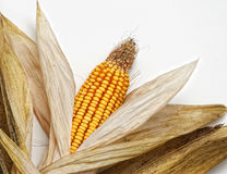Corncob On White Royalty Free Stock Photo