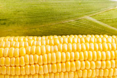 Corncob ready for eating and cooking Stock Photo