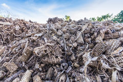 Corncob after use. Corncob after chip corn grain. In thailand use scrap corncob to Biomass Energy power, Charcoal Cooker and animal feed Stock Images