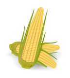 Corncob Royalty Free Stock Photography