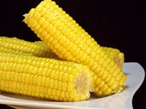 Corncob Stock Image