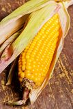 Corncob on wood Stock Image