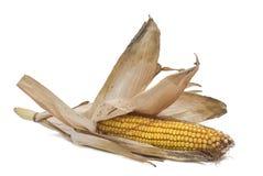 corncobs высушили свою кожу Стоковые Фото