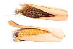 corncobs изолировали Стоковое Фото