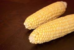 corncobs свежие Стоковые Изображения RF