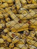 corncobs Стоковые Изображения